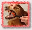 We clean teeth at AZ Mobile Grooming